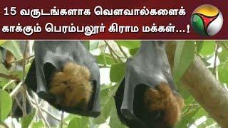 15 வருடங்களாக வௌவால்களைக் காக்கும் பெரம்பலூர் கிராம மக்கள்...!