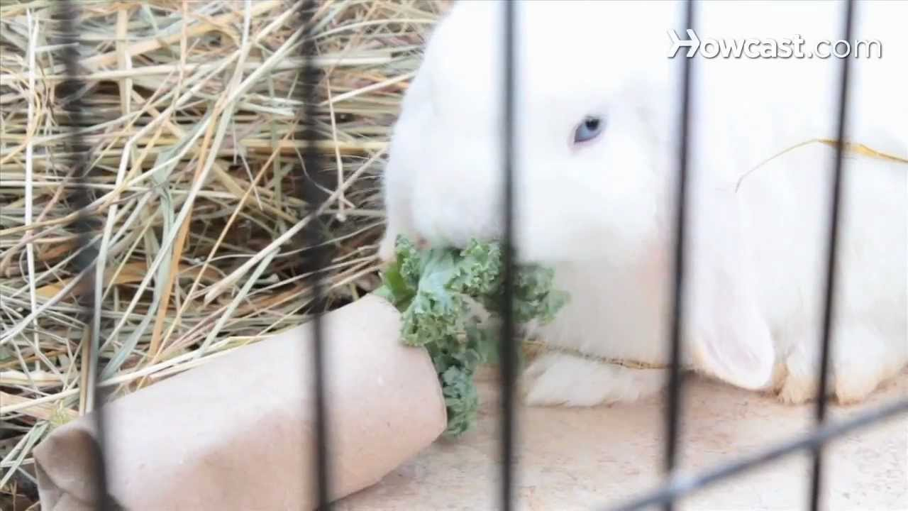 How to Set Up Rabbit Hutches & Cages   Small Pets - YouTube