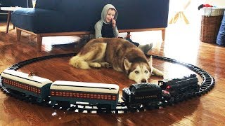 Siberian Husky trapped by Polar Express Toy Train!
