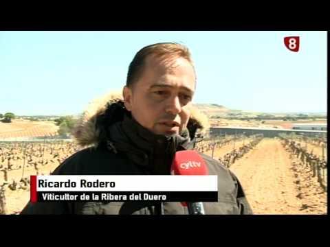 Noticias Primera Edición La 8 Burgos 28-04-2017