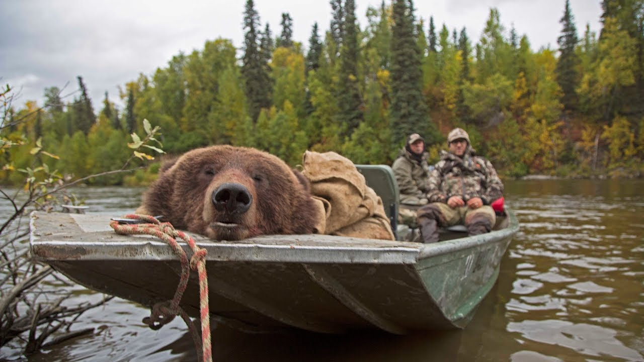 Alaskan brown bear hunt in the fall: Conservation ... - photo#1