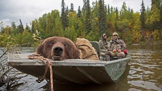 Alaskan brown bear hunt in the fall