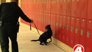 Lee Schools To Use K9 Dog To Sniff Out Drugs, Guns
