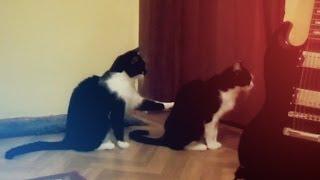 Кошка просит прощения / Ржу не могу / Cat tries to apologize