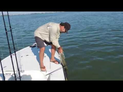 Clearwater Florida fishing trips  (727) 251-2623