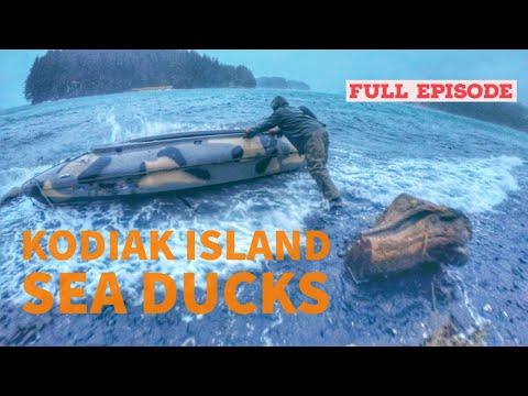 Kodiak Island Sea Ducks