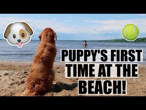 OUR PUPPY'S FIRST TIME SWIMMING AT THE BEACH!!