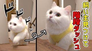 飼い主の気配を感じて階段ダッシュをする猫!