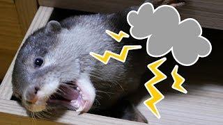 雷雨の日に撮影したのですが、意外と?怖がらないので安心しました。う...