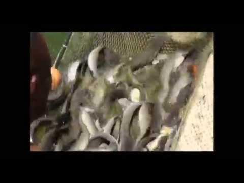 Elevage intensif de poissons à la ferme de Damien