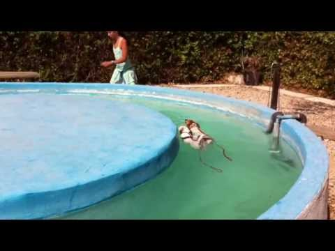 Residencia canina en brunete madrid youtube for Piscina perros