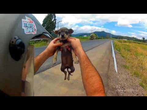 MOTOS ACTOS DE HUMILDAD - SALVANDO ANIMALES #1