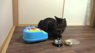 チューリップの歌を初めて聞いた 猫の大五郎の演奏です!