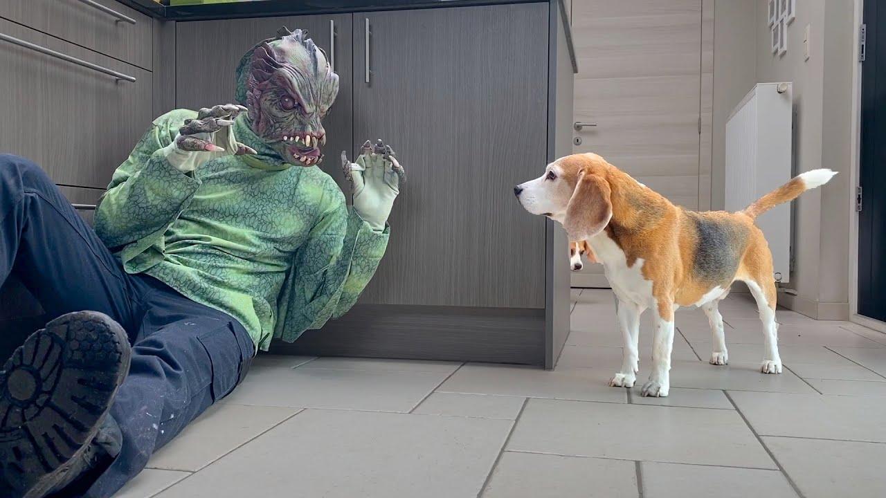 Dogs vs Alien Fish Prank : Funny Dogs Louie & Marie