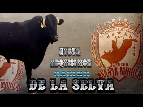 NUEVA ADQUISICION!!! RANCHO SANTA MONICA.... PRESENTA.... CASINO DE LA SELVA....ESPECTACULAR