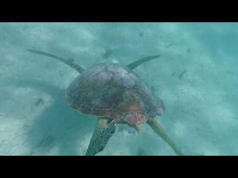 Noumea, New Caledonia - Pacific Dawn Cruise - Exploring Reef and Island 2018