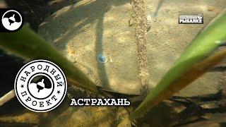 Астраханские сомы во всей красе Народный проект