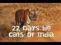 The Big Cats of India - Lion, tigers and leopards all in one trip??