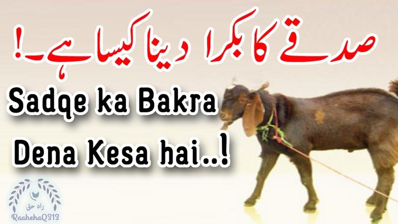 sadqay ka bakra Dena Kesa hai - صدقہ کا بکرا - sadqa dene ka tariqa