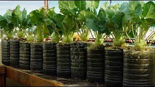 Tái chế chai nhựa đứng để trồng su hào | Recycle standing plastic bottles to grow kohlrabi