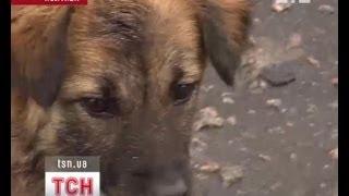 В Полтаве усыпили рыжего пса-маньяка