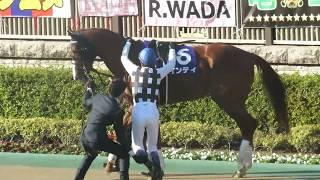 【インティ&武豊騎手】パドックで跨る所 第36回フェブラリーステークス(GⅠ)