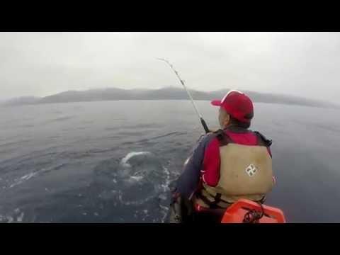 There will be Fish - Yellowtail Kayak Fishing - Malibu