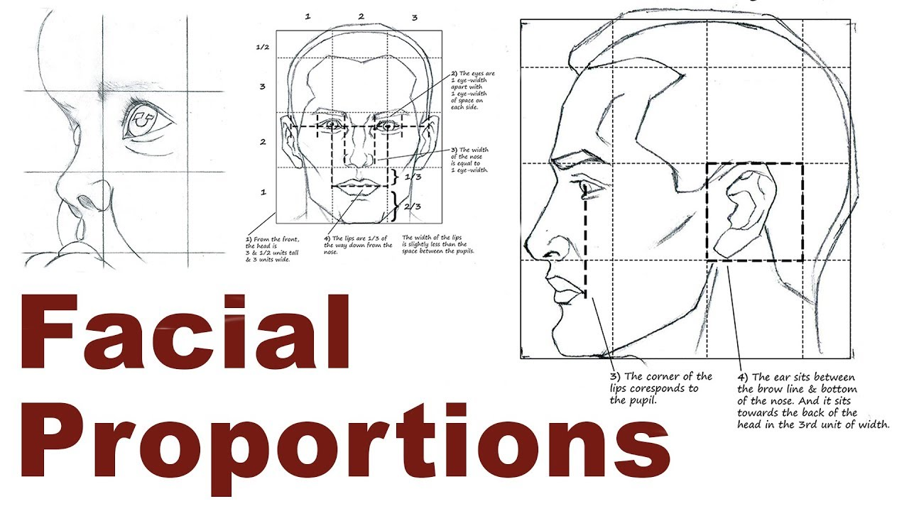 hight resolution of diagram of eye and nose