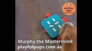 Murph the master