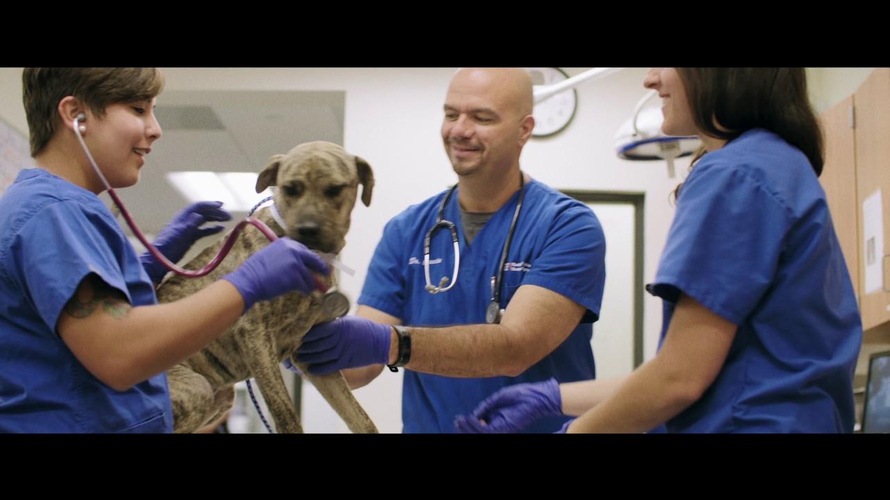 zeitplan dissertation Master of Veterinary Science (MVSc)