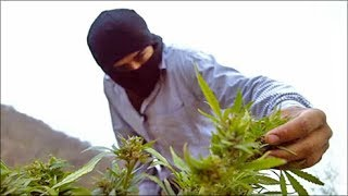 فيلم وثائقي عن المخدرات