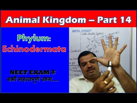 Echinoderms Characteristics | Animal Kingdom | NEET Bio | Part 14