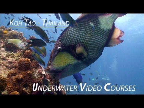 Underwater Video Training Dives Koh Tao
