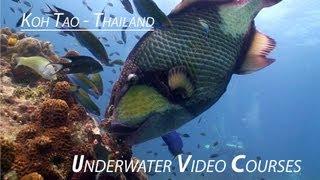 Underwater Video Training Dives Koh Tao