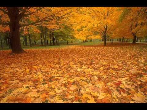 Клип DLS - Листья