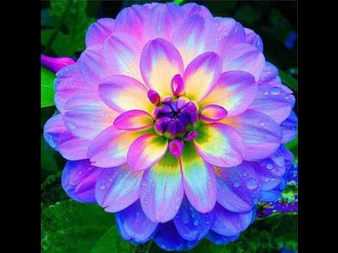 As flores mais lindas do mundo youtube - Fotos de flores bonitas ...