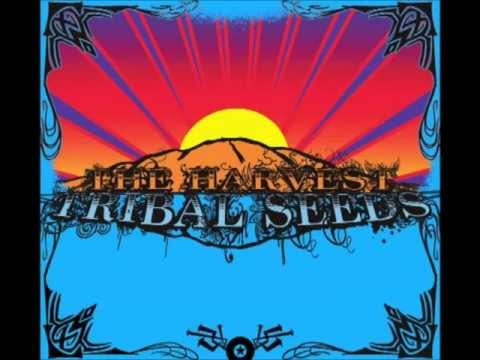 Tribal Seeds - Warning