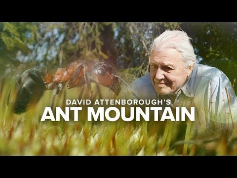 David Attenborough's Ant Mountain