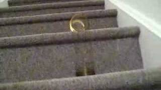 Slinky goes down the stairs