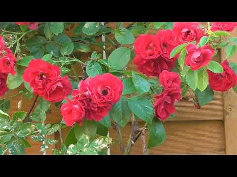 Come to my Garden - Hilde Aasen