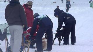 犬たちの甲子園 第28回全国犬ぞり稚内大会での3頭引きレース.