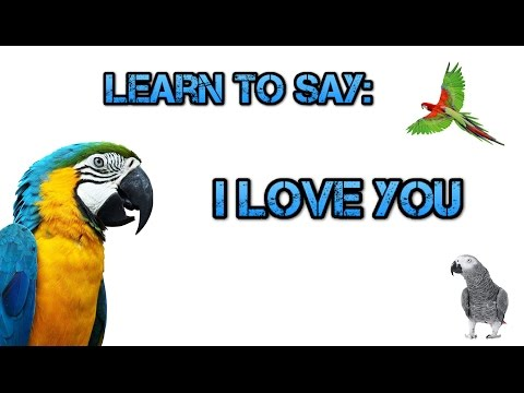 Teach your Parrot to say I Love You! - Parrot Talk