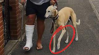 Dog Pretends To Walk With A Limp Like Their Injured Owner Out Of Sympathy - 1171077