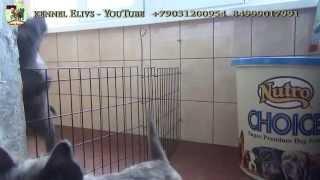 Cairn Terrier Video Jokes. Керн терьер видео приколы