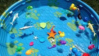 Box of Toys Learn Sea Animals Learn Colors Nursery Rhymes