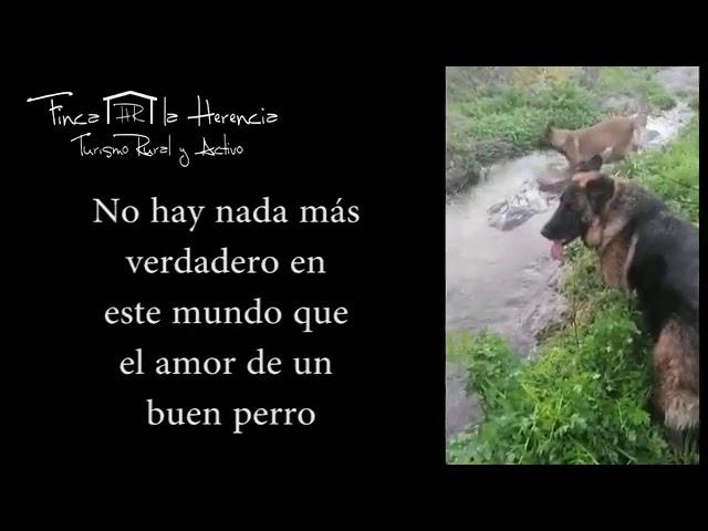 Arroyo natural en el Hotel Rural Finca la Herencia