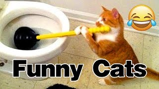 Funny Cats compilation 2019