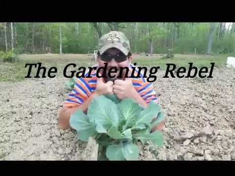 My almost organic vegetable garden and some tips for growing your own food ...