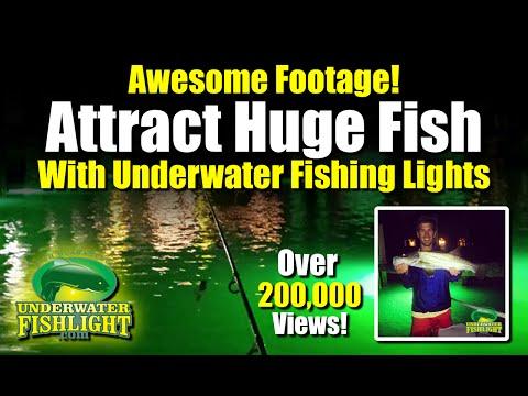 fish light comparison - green underwater dock lights vs.old, Reel Combo