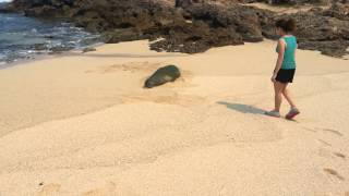 Courtney Meets an Endangered Hawaiian Monk Seal